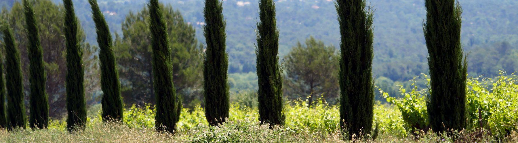 Provence verte - photographe Var - www.pixair83.fr